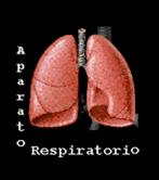 Debido a la estimulación de la progesterona, tu capacidad pulmonar  aumenta