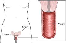 Durante este trimestre  vas a notar un aumento en el flujo vaginal  y se debe a la estimulación hormonal  sobre las células que recubren la vagina.