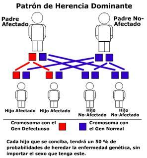 Herencia ligada al cromosoma x dominante
