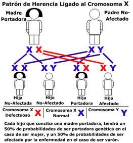 Consanguinidad_clip_image006