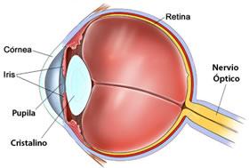 ¿Cuál es la estructura normal del ojo y cómo funciona?