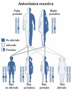 se necesita que los dos padres sean portadores del gen defectuoso para que el hijo herede la enfermedad