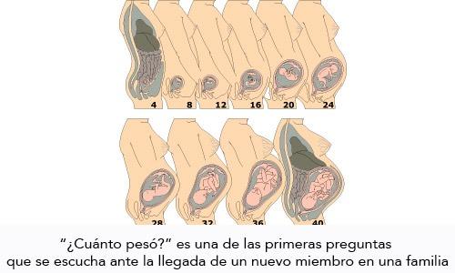 Desnutrición Intrauterina Retraso del Crecimiento Intrauterino