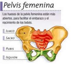 Para que tu bebé pase a través de la pelvis más fácilmente, tu cuerpo produce una hormona llamada relaxina, que ablanda los ligamentos de la pelvis