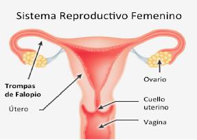 embarazo-ectopico1