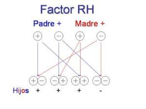 ¿Qué es y como se hereda el factor RH?