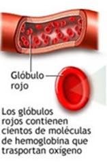 ¿La fatiga puede ser un síntoma de anemia?