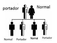 """Si uno de los padres es portador de EG y el otro no lo es, existe un 50% de probabilidades de que tengan un hijo que herede el """"gen Gaucher"""" y sea convertirá en portador."""