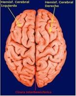 Externamente el cerebro está dividido en dos partes llamadas Hemisferios Cerebrales, Izquierdo y derecho. Cada uno de los hemisferios está constituido en su totalidad por circunvoluciones, pliegues y surcos