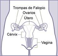 ¿Qué es la vagina?