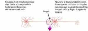 ¿Qué es exactamente lo que se transmite de unas neuronas a otras?