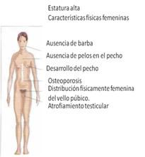 Esta falta de respuesta hormonal ocasiona poco vello facial, púbico, ginecomastia, y osteoporosis. Estos hombres por lo general son un poco más altos que hombres de la población general y tienen bajo tono muscular. La inteligencia en estos hombres también es normal.