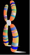 Como ya lo mencionamos anteriormente, el Síndrome de Lowe es un trastorno hereditario. La herencia es la transferencia del material genético (DNA),  contenido en los cromosomas, de una generación a la siguiente.