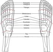 Visión desde la parte superior del pie o empeine