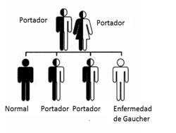 El matrimonio entre dos portadores se ilustra en la siguiente imagen, se obaerva que existe una posibilidad en 4 de que un hijo tenga la enfermedad, 1 en 2 de que sea sano pero portador y 1 en 4 de que no será ni portador ni enfermo.