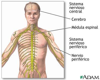 Infogen | Defectos del Tubo Neural