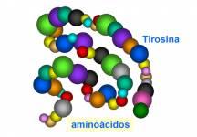 La tirosina es uno de los 20 aminoácidos que utiliza la célula para sintetizar las proteínas. La tirosina se forma a partir de otro aminoácido llamado fenilalanina y también se forma directamente por degradación (transformación de moléculas orgánicas complejas en otras más simples) de las proteínas de la dieta.