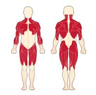 distrodia muscular