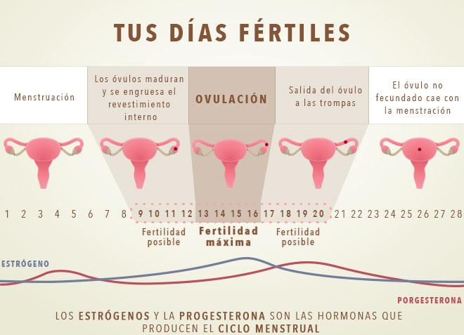 diasFertiles2c