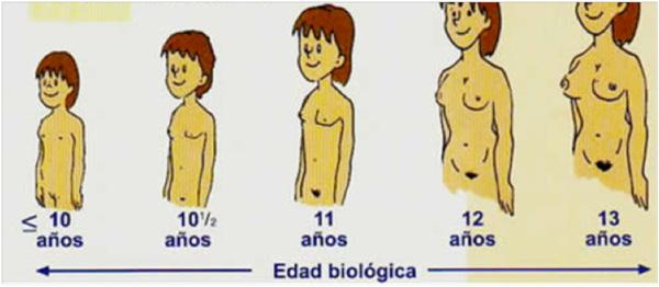 Evolución de una mujer según la edad
